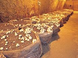 蘑菇博物馆